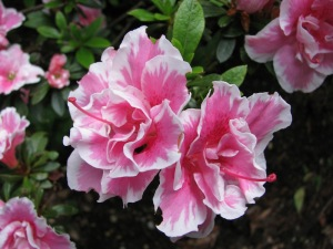 Flower / Vibrational Essences